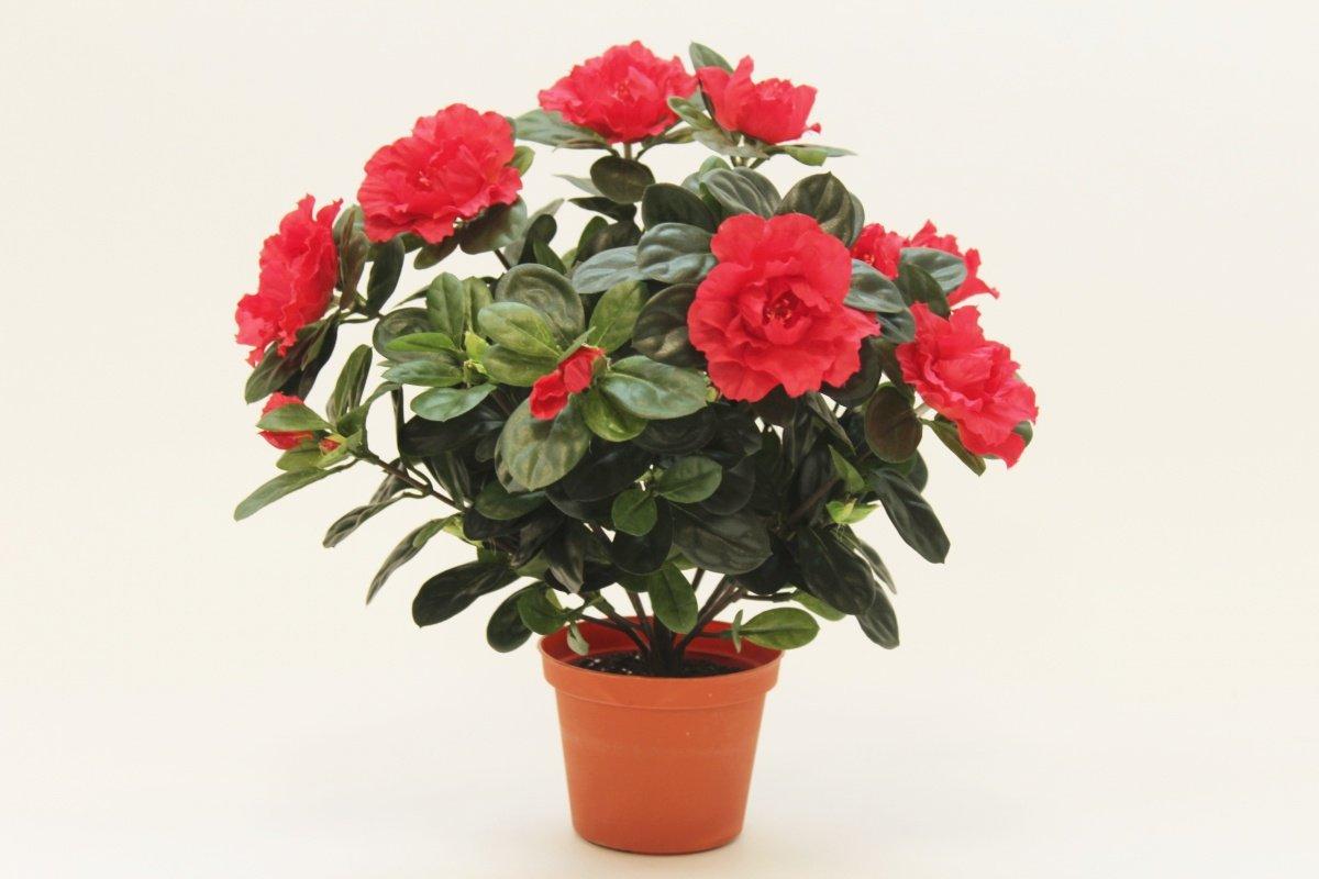 Купить цветы цены в минске фото, огромные букеты из роз картинки