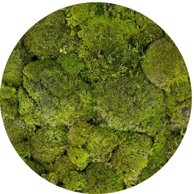 955_2-boll_moss_spring_kolo.png